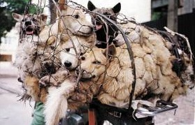 Σφάζουν και πουλάνε σκύλους στο κέντρο της Αθήνας