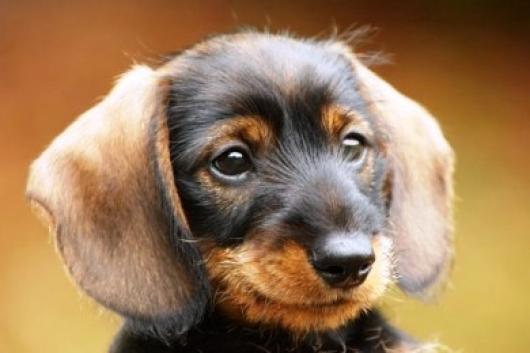Ο δεκάλογος της αγάπης για το σκύλο μας