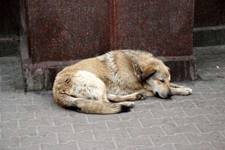 Αυτόφωρο για όσους κακοποιούν ζώα
