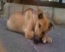 Η ιστορία ενός αδέσποτου σκύλου