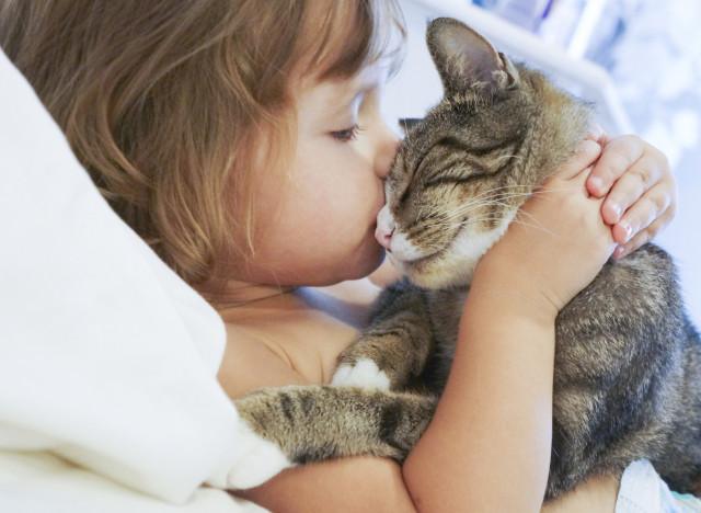 8860e5608233 11 λόγοι που οι γάτες μας κάνουν πιο ευτυχισμένους