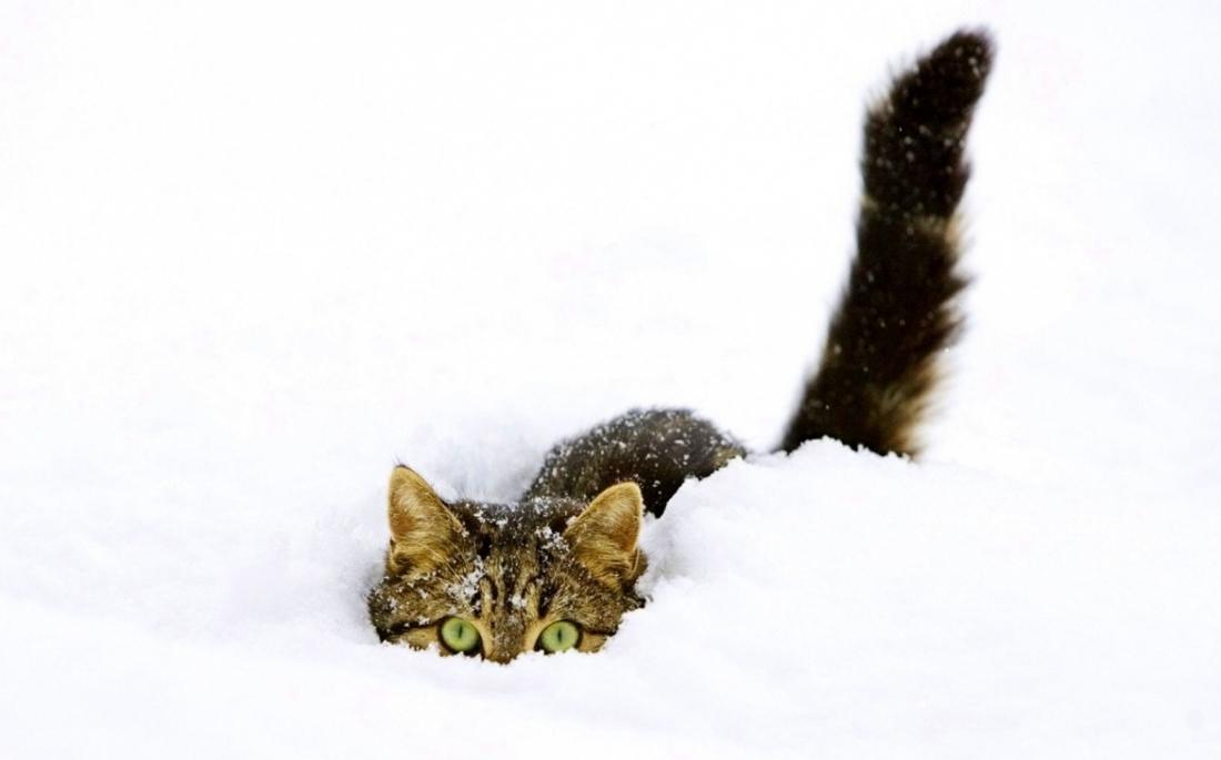5 τρόποι να προστατέψεις τις γάτες που κυκλοφορούν έξω το χειμώνα