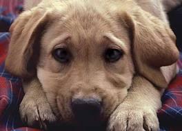 Φριχτός απαγχονισμός σκύλου