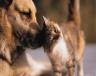 Βοήθεια σε ζώα τον Οκτώβριο