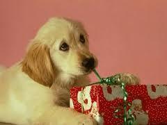 Δώρο ζωάκι για τα Χριστούγεννα;