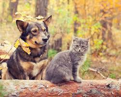 Τι προσέχουμε το φθινόπωρο στα ζώα