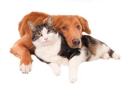 Προληπτικές εξετάσεις σκύλου και γάτας