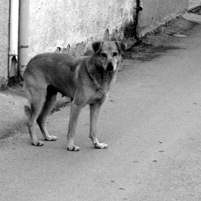 Δηλητηριάσεις ζώων στην Ηλιούπολη