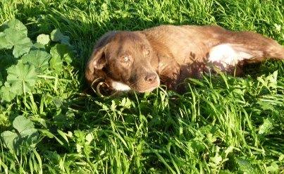 Την αναγνωρίζετε; Είναι η σκυλίτσα με το γάντζο στο πόδι...!