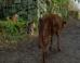 Γάτα οδηγεί τυφλό σκύλο
