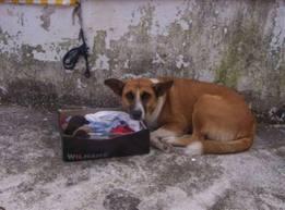 Δολοφονία ζώου σε στρατόπεδο