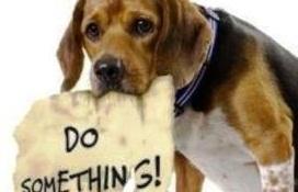 Ναι στη στείρωση ζώων