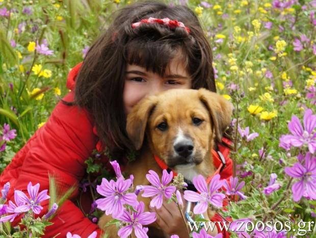 Τα σκυλιά έχουν παρόμοια κοινωνική νοημοσύνη με τα μικρά παιδιά
