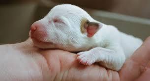 Φροντίδα για νεογέννητα ζώα
