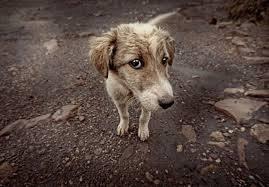 Τροποποίηση του νόμου για τα ζώα συντροφιάς