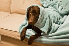 Έκκληση για πετσέτες.