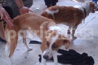 Ένα χρόνο φυλακή για παραμέληση σκύλων