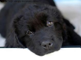 Πυροσβέστης έδωσε το φιλί της ζωής σε σκύλο
