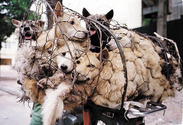 Και τώρα, ας γιορτάσουμε πενθώντας, την Παγκόσμια Ημέρα των Ζώων