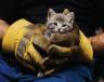 Διάσωση γάτας στο Χολαργό