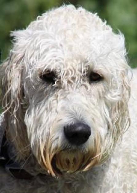 Οι σκύλοι νιώθουν απαισιοδοξία