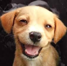 Οι σκύλοι διακρίνουν το χαμόγελό μας!