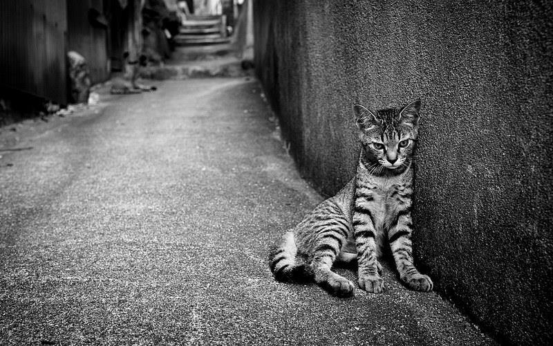 Έκπτωση σε στειρώσεις γατιών