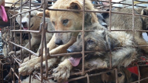 Η Ταϊβάν γίνεται η πρώτη χώρα στην Ασία που απαγορεύει την κατανάλωση κρέατος σκύλου και γάτας