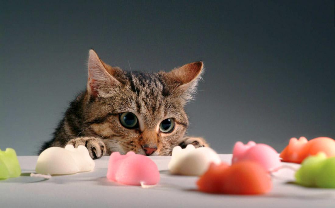 3 τρόποι με τους οποίους η γάτα σου προστατεύει την υγεία σου