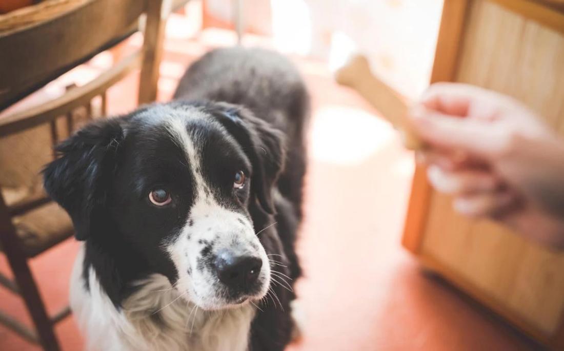 Κι όμως ο σκύλος σου θυμάται τα πάντα για εσένα