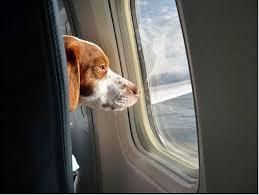 Ταξιδεύοντας με το σκύλο μας