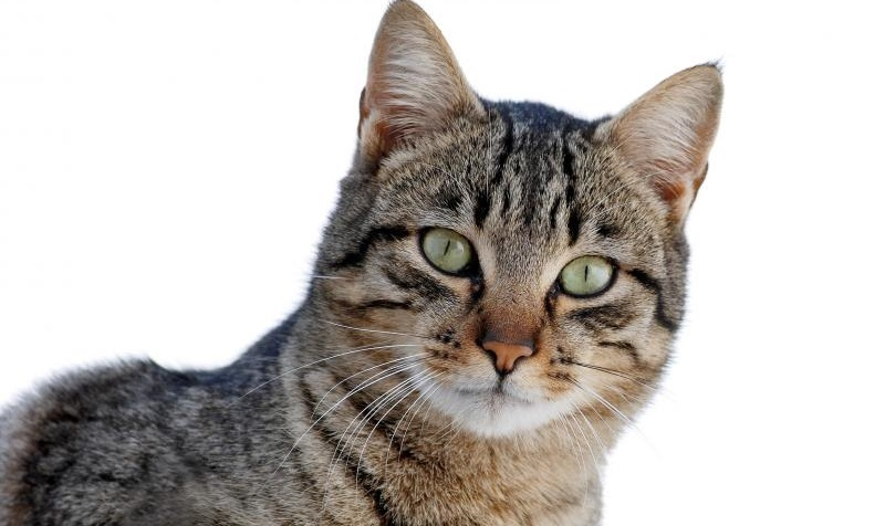 Προσφορά σε στείρωσεις αδέσποτων γατών
