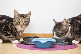 10 τροφές που ΔΕΝ πρέπει να δίνεις στη γάτα σου