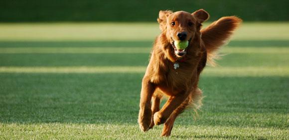 Ασκηση σώματος και μυαλού του... σκύλου σας.