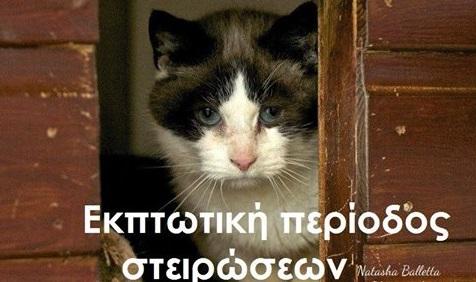 Έκπτωση σε στειρώσεις γατιών!
