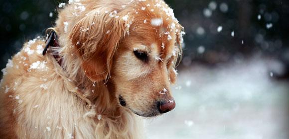 Προστάτεψε το σκύλο σου από το κρύο
