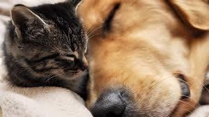 Χαμηλό κόστος στειρώσεων σκύλων τον Φεβρουάριο & Μάρτιο