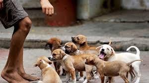 Το μυστικό της μακροζωίας:η βόλτα με το σκύλο σου!