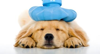 Πρώτες βοήθειες για το σκύλο