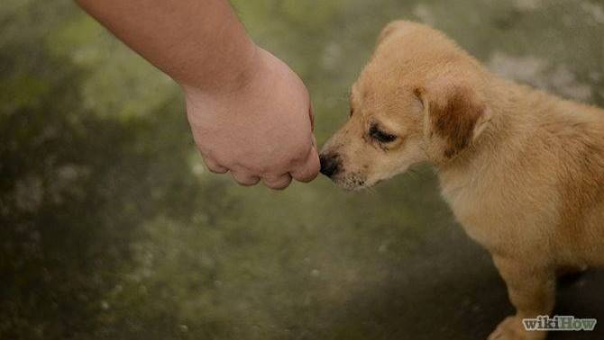 10 σωστά βήματα για να πλησιάσετε ένα αδέσποτο ζώο...
